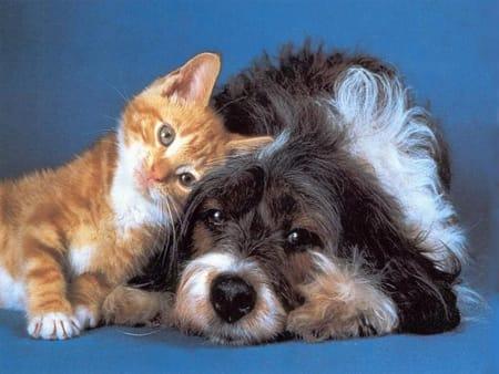 Fiumicino, firmato il protocollo per la promozione delle adozioni e del benessere degli animali