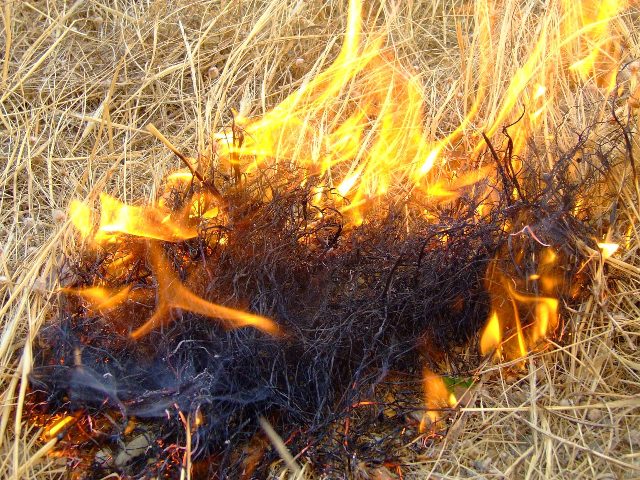 Ladispoli, incendio minaccia il bosco di Palo