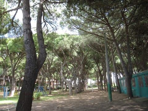 Montalto, avviate le procedure per l'abbattimento dei pini di via Arbea