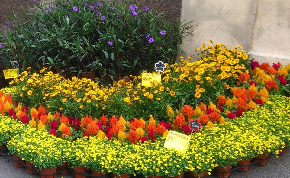 Anche quest anno florevent a santa marinella terzo for Arredo giardino anguillara