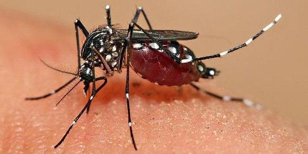 Chikungunya, isolato il virus allo Spallanzani: soddisfazione di Zingaretti