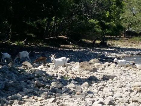 """Lago di Bracciano, #openlake: """"I livelli scendono di un centimetro al giorno"""""""