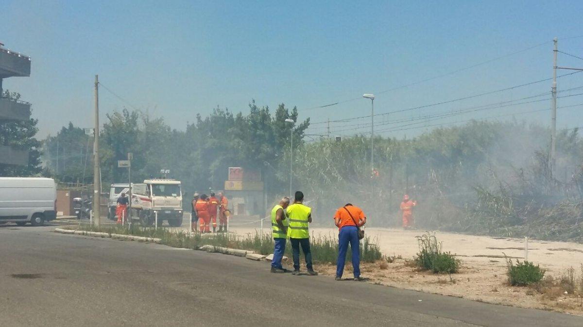 "Incendi Ladispoli, Grando: ""Disastro ambientale, chi ha visto parli"""