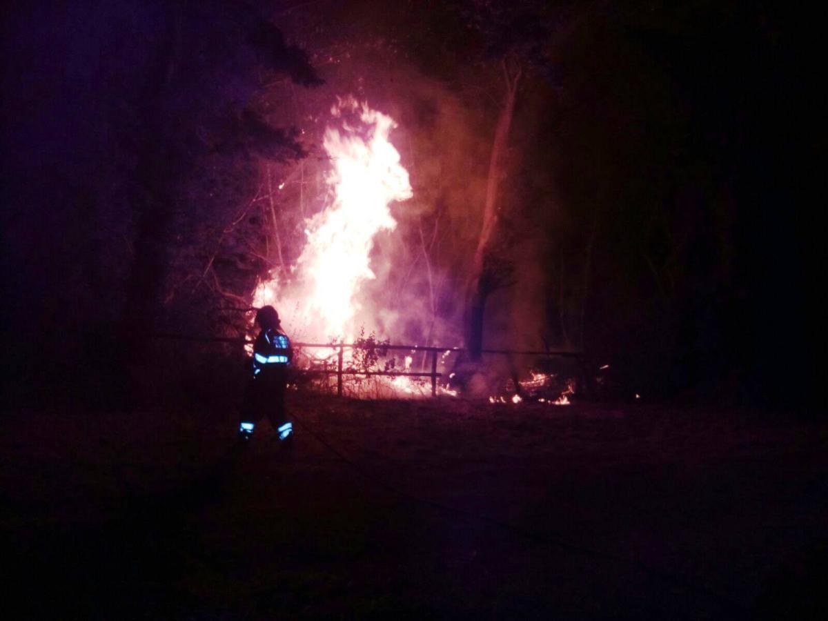 Manziana, la castagneta completamente distrutta dalle fiamme