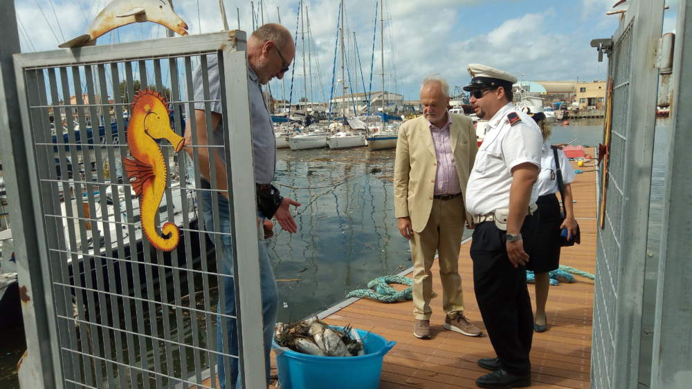 """Fiumicino, Montino: """"Quintali di pesci morti in Darsena"""""""