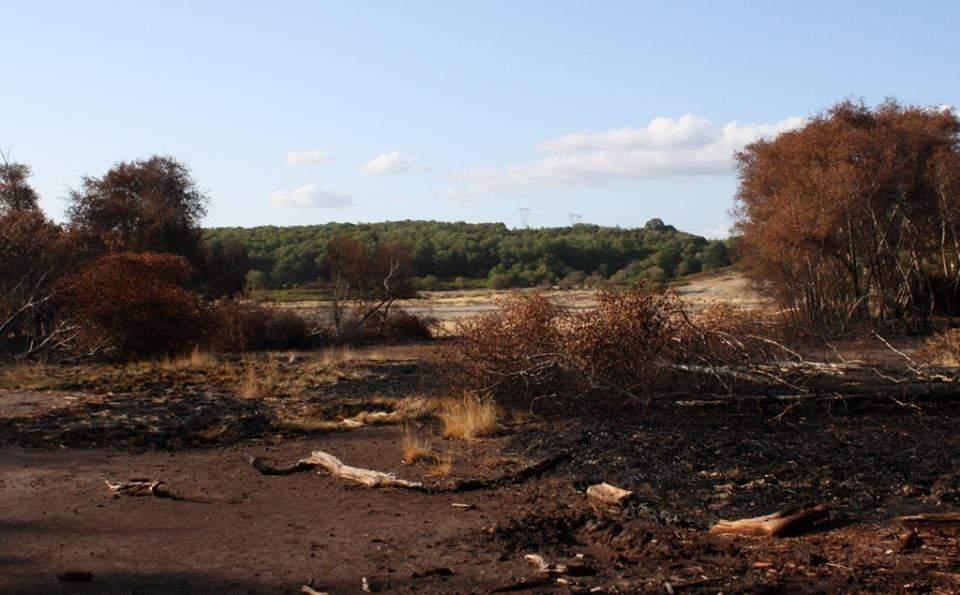 """Incendio Castagneta, Bruni: """"Dobbiamo impegnarci per far tornare quella zona il polmone verde che è sempre stato"""""""