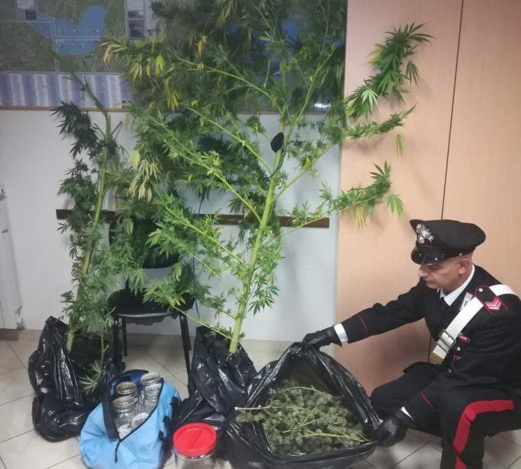 """Anguillara, il pollice verde per """"l'erba"""" tradisce un 28enne"""