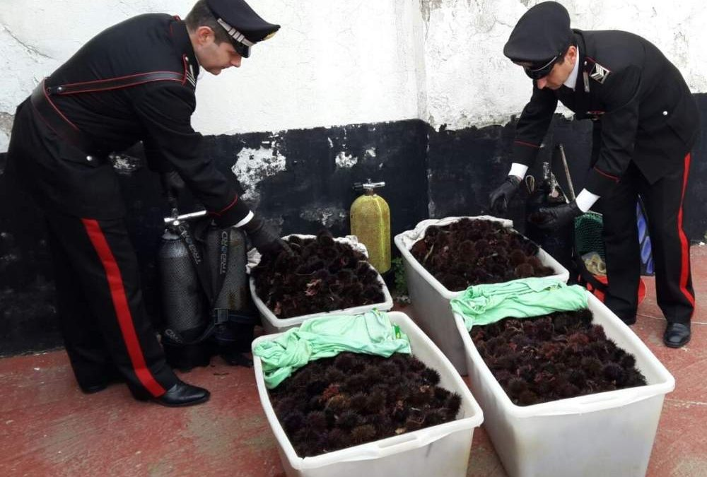Santa Marinella, pesca abusiva di ricci: denunciato un pescatore
