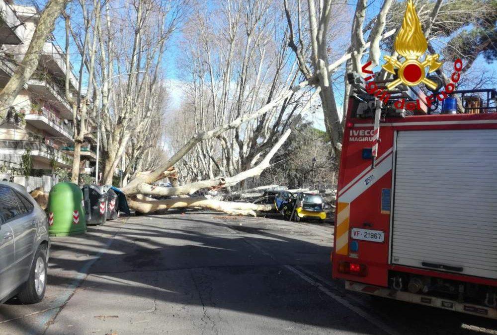 Vento Forte, alberi e lampioni caduti in diverse zone della provincia di Roma