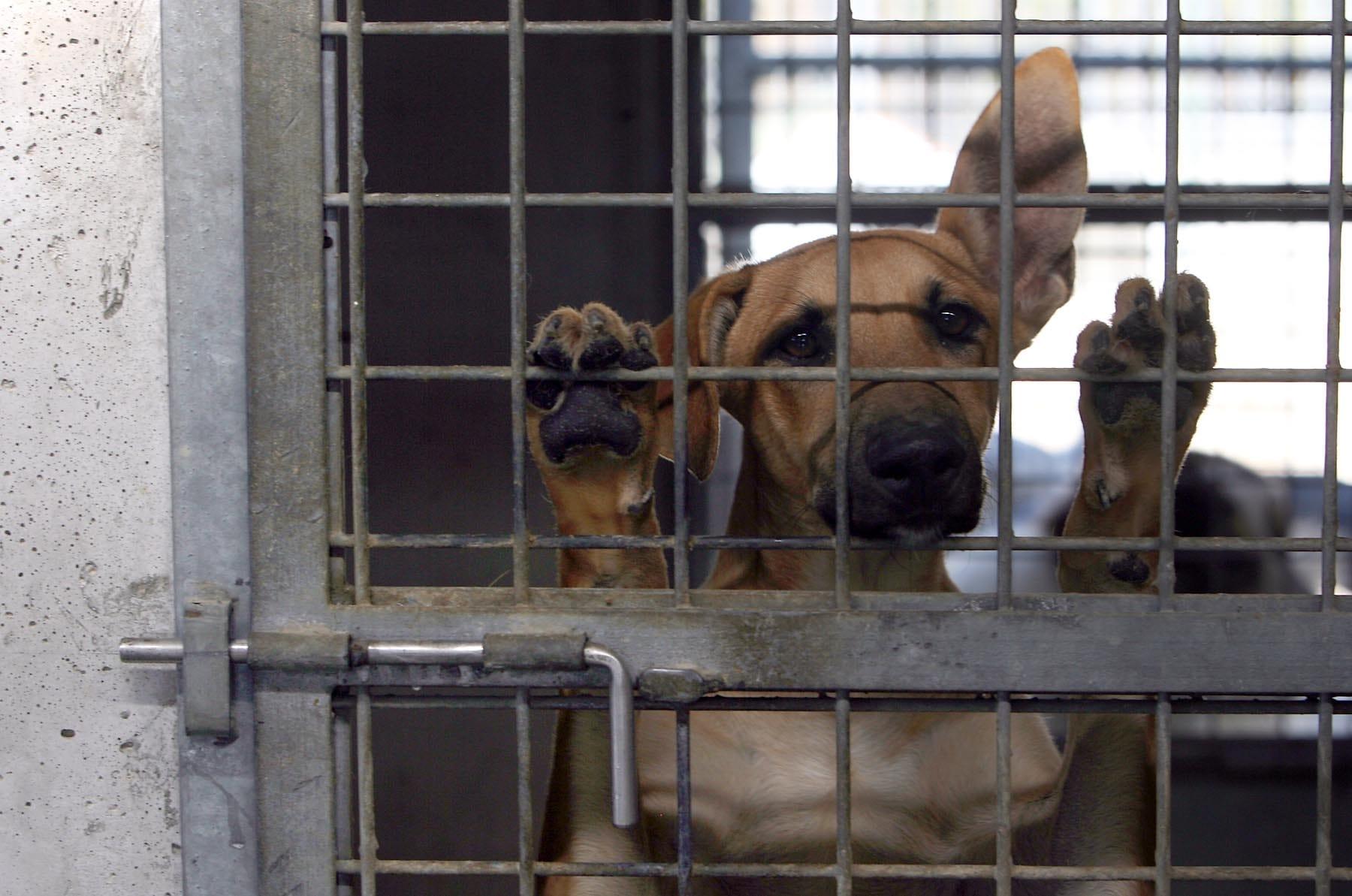 """Allumiere, """"animali maltrattati"""": interrogazione di ArticoloUno"""