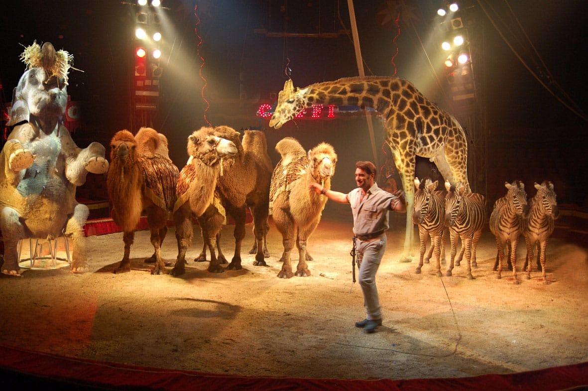 Ladispoli, Dammi la Zampa contro l'arrivo del circo
