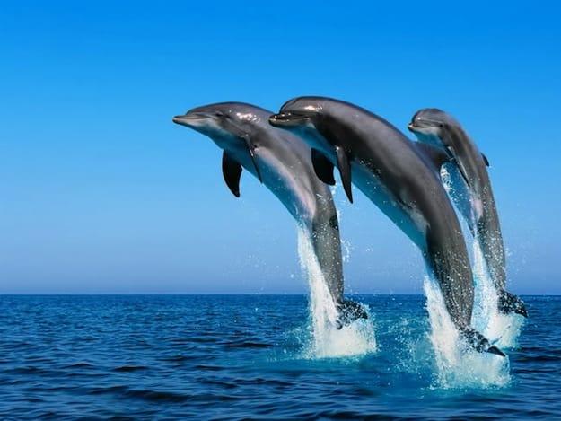Delfini Capitolini: ecco risultati Campagna 2017