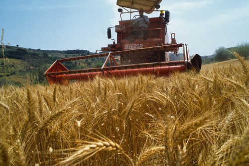 """Cerveteri, il delegato Ferri: """"Gli agricoltori stringano i denti, il comune è con loro"""""""