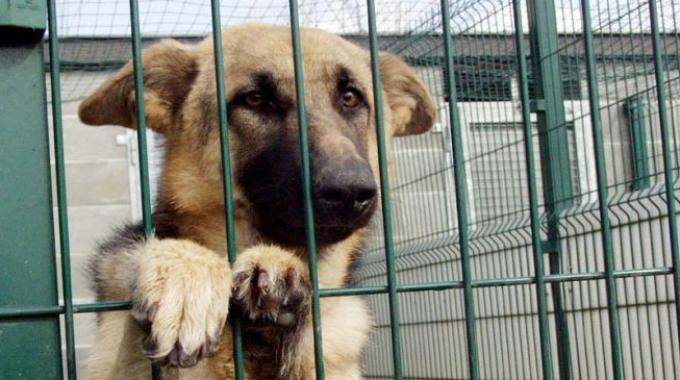 Asl Roma 4, campagna social per l'adozione degli animali dei canili