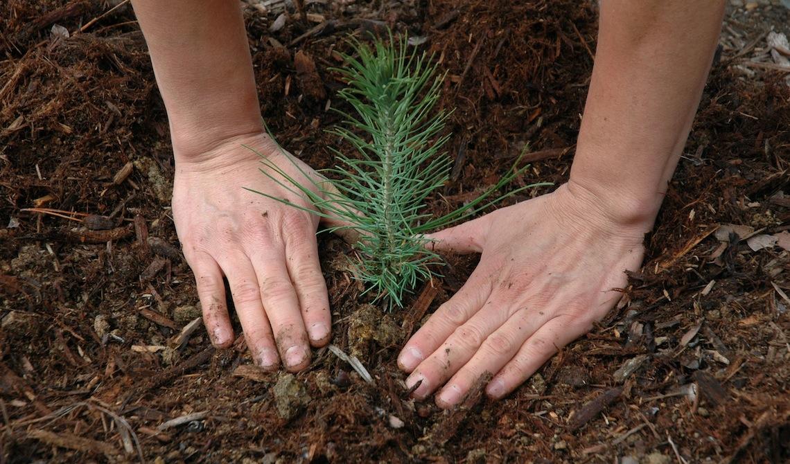 'Polmone verde' a Civitavecchia: i cittadini adottano un albero