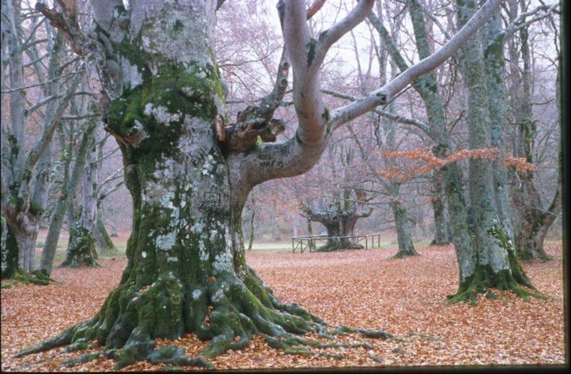 Tarquinia, festa al bosco urbano