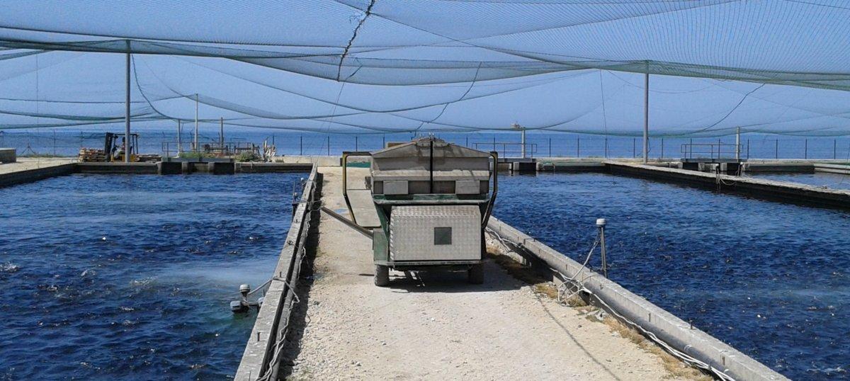 Civitavecchia, il caso pescicoltura sottoposto al Quirinale