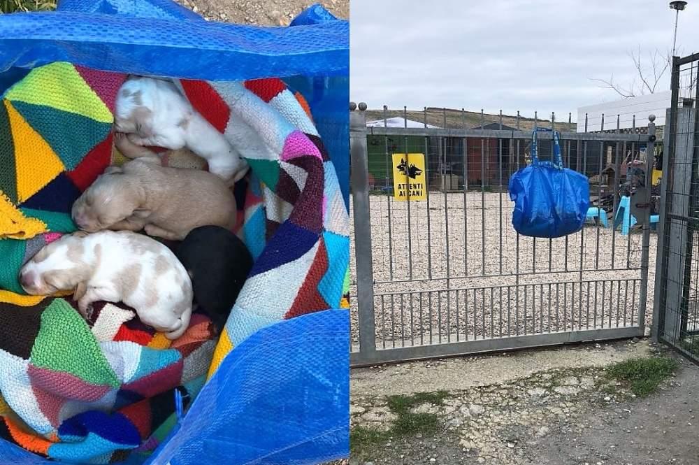 Cuccioli abbandonati in una busta, salvati dall'Aspa Anguillara