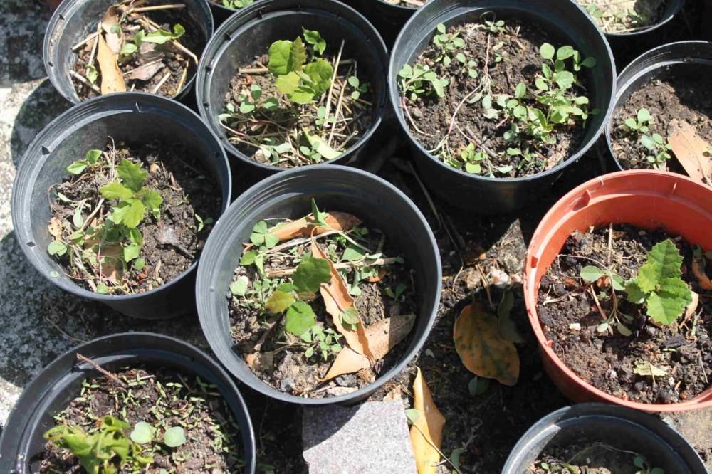 Ladispoli, i ragazzi della Melone piantano 500 ghiande per rimboschire il Bosco di Palo
