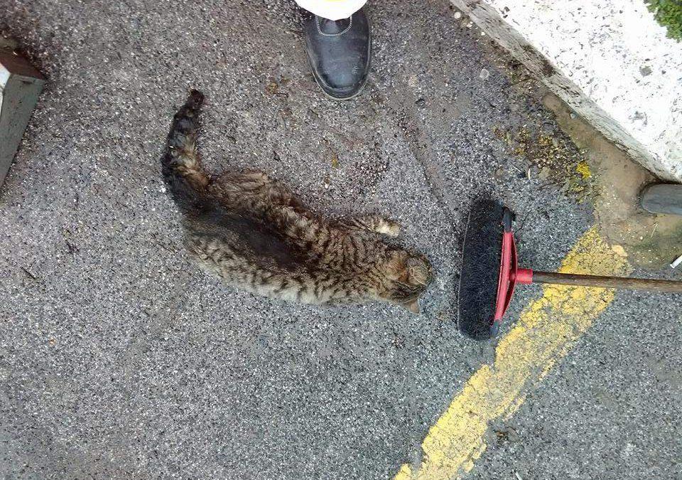 Avvelenati i gatti di Allumiere