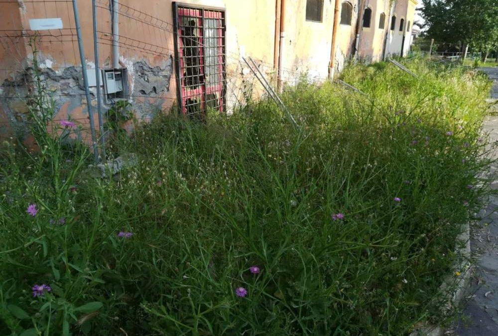 Civitavecchia, Parco Yuri Spigarelli: la Giunta approva il progetto definitivo