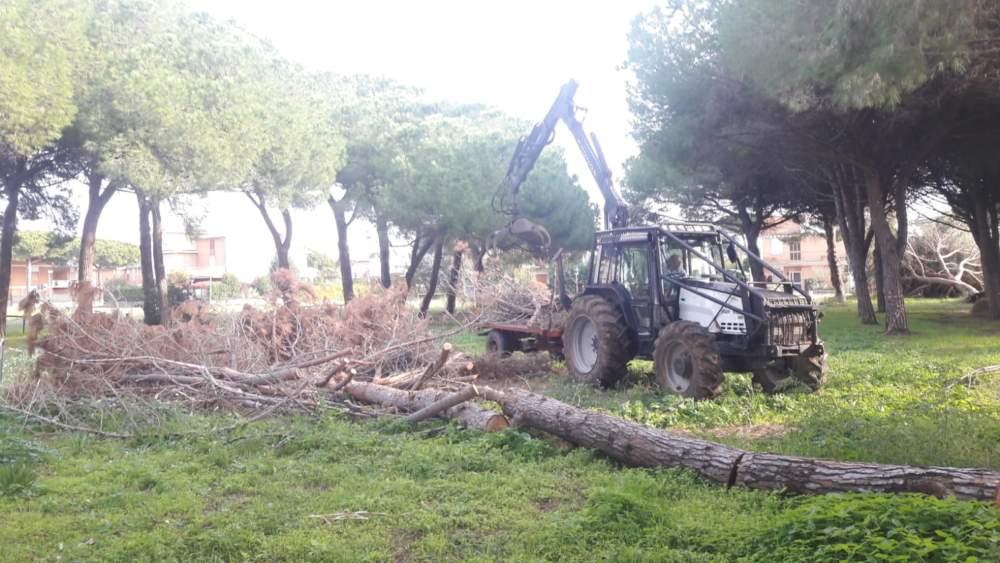 Tarquinia nel Cuore apprezza pulizia e messa in sicurezza della pineta al Lido