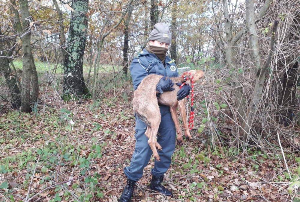 Cane affamato salvato dalle Guardie Ecozoofile Fareambiente Cerveteri