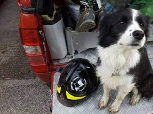 Cane salvato dai Vigili del Fuoco a Bracciano