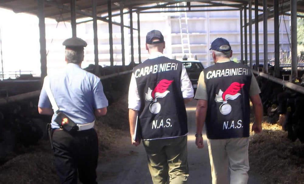 Tre arresti dei carabinieri di Bracciano, di cui uno ad Anguillara. Due macellerie sanzionate