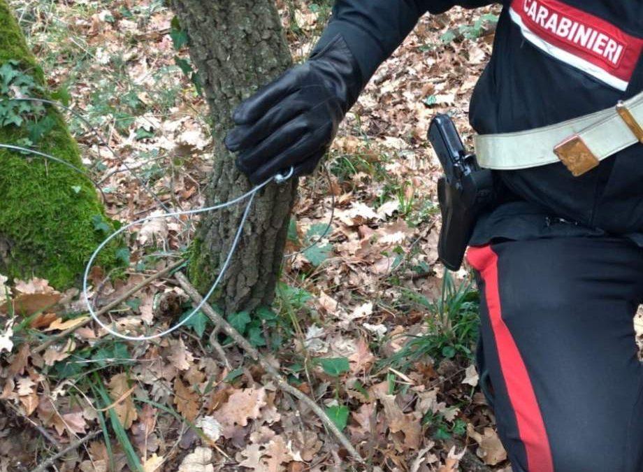 Bracconiere dei lacci nella riserva di Monterano denunciato dai carabinieri