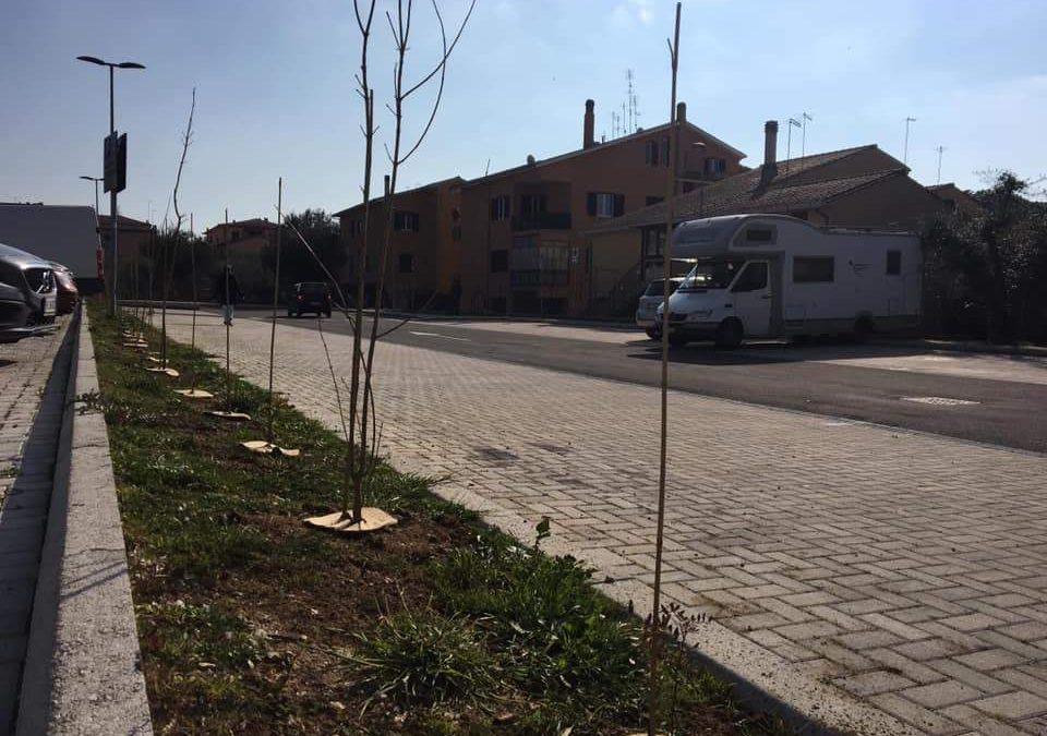 Trevignano green: piantati 800 alberi