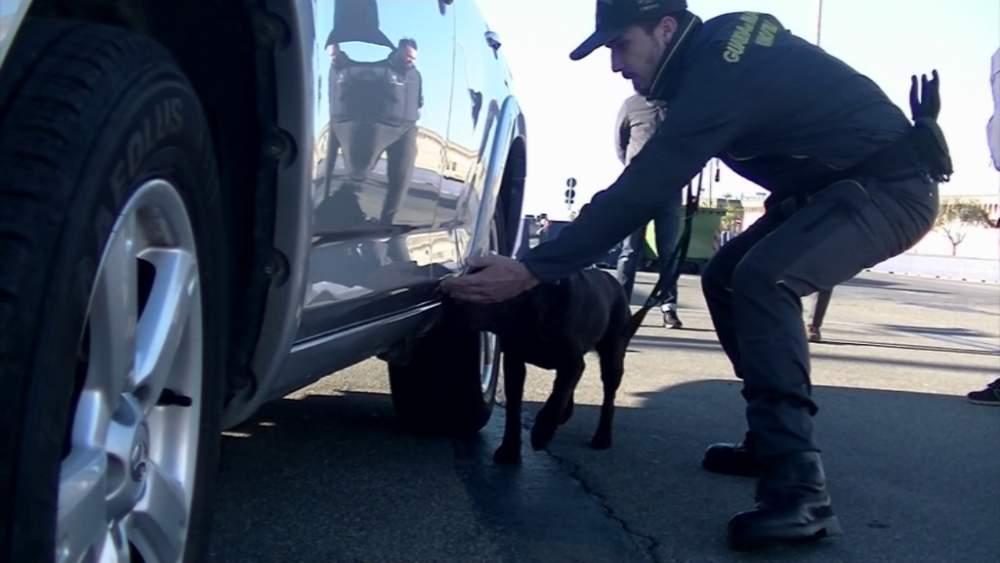 Un quintale di fumo in auto: la Finanza arresta al porto una coppia di ucraini grazie alla labrador Losna +++VIDEO+++