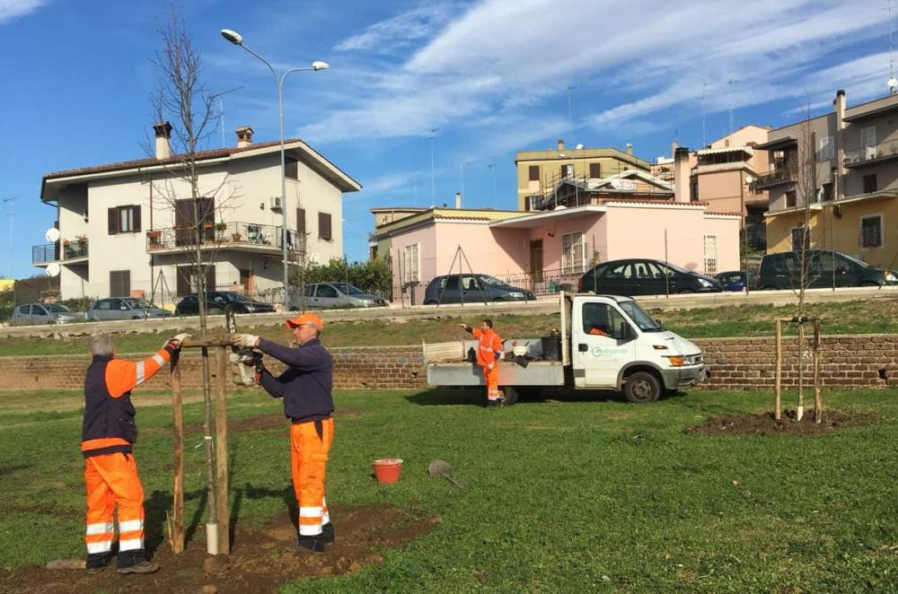 Cerveteri, la Multiservizi Caerite mappa gli alberi cittadini