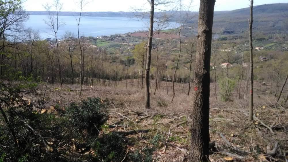 Bracciano, cittadini preoccupati per il taglio degli alberi
