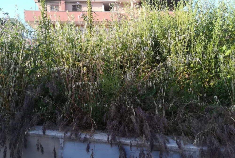 Ladispoli, erba alta al sottopasso: la denuncia di Si Può Fare