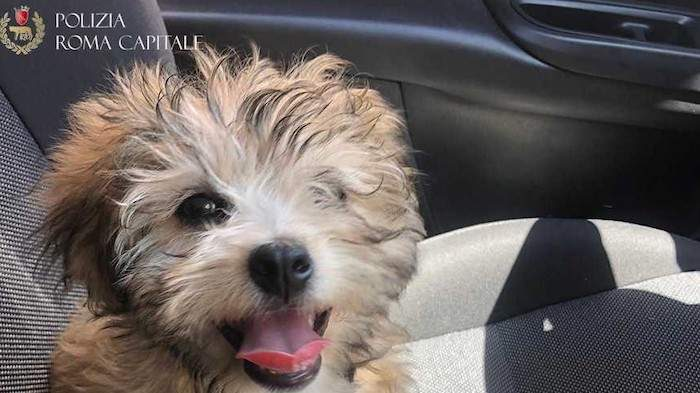 Monti, cucciolo utilizzato per chiedere l'elemosina: vigilessa lo adotta
