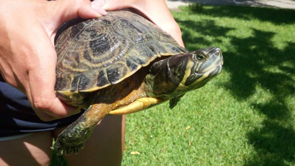 Cerveteri area verde via o romero nuova vita per le for Lago per tartarughe