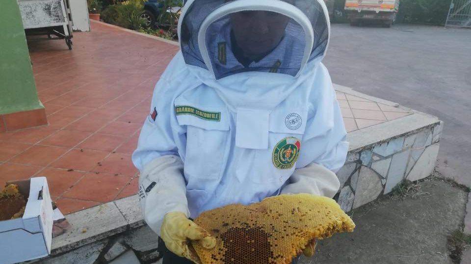 Cerveteri, nido d'api a sei strati nella serranda: intervento delle Zoofile Fareambiente
