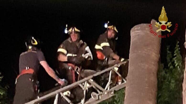 Civitavecchia, addio alla palma di piazza Calamatta: i pompieri costretti a rimuoverla