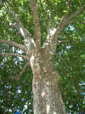 """Bracciano, il Sindaco Tondinelli su potature e taglio alberi: """"Nessuno stop da Forze dell'Ordine, c'è una dettagliata relazione di un professionista"""""""