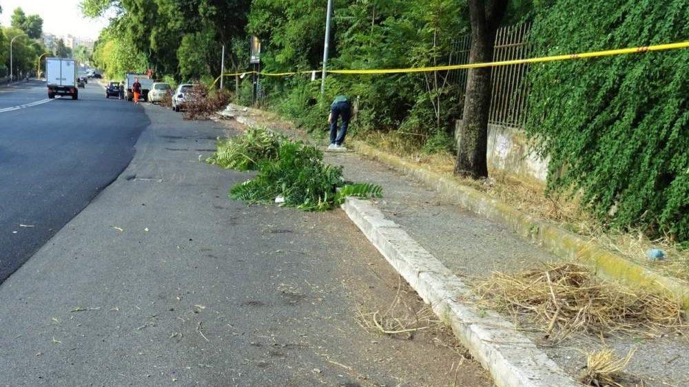 Via Mattia Battistini, interventi di pulizia