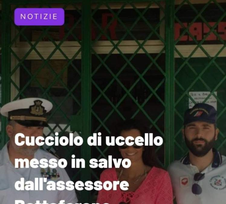 Battuta sessista nei confronti dell'assessora Battafarano: Marco Dattilo torna a fare gaffe