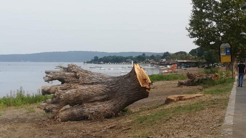 Tellaroli presenta esposto per mancata sicurezza dei lavori di potatura e abbattimento alberi da parte del Comune di Bracciano