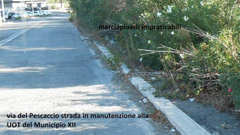 """Via del Pescaccio, Bisenti (M5S): """"Marciapiedi impraticabili"""""""