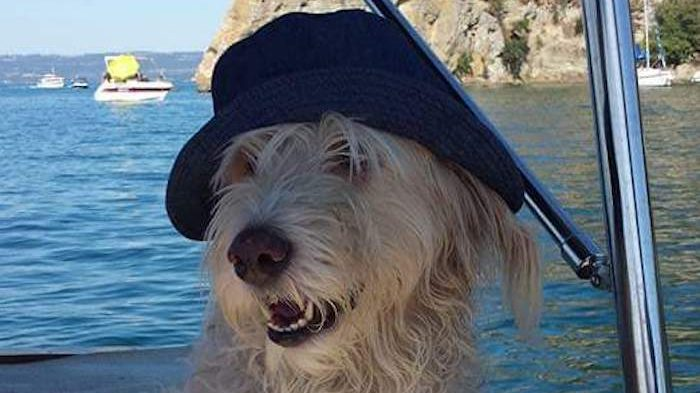 Civitavecchia, Gina e i suoi amici: gli interventi assistiti con animali e i loro benefici