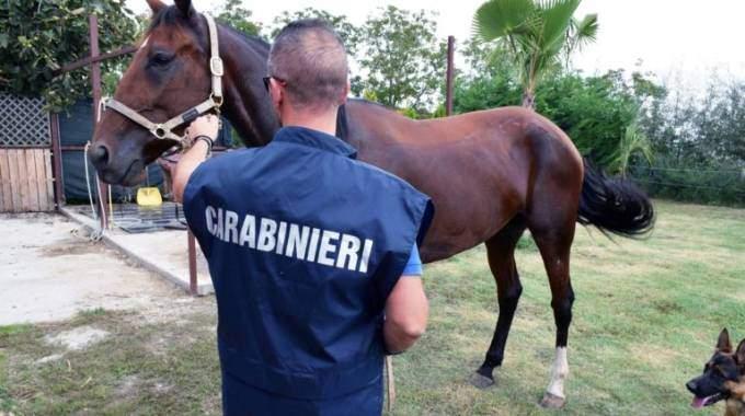 Maneggi irregolari: intervento dei Carabinieri a Bracciano