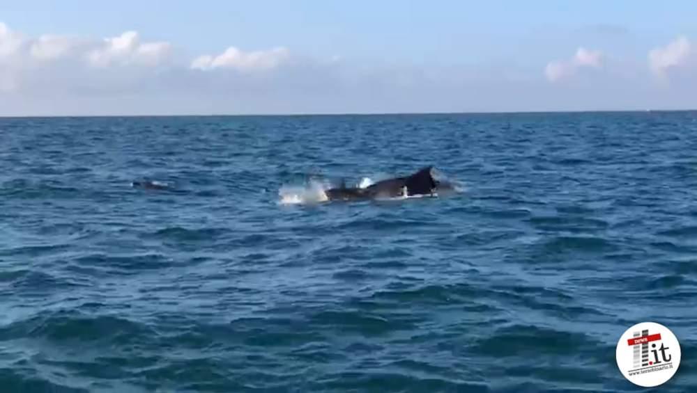 """Delfini in """"visita"""" al porticciolo di Santa Marinella"""