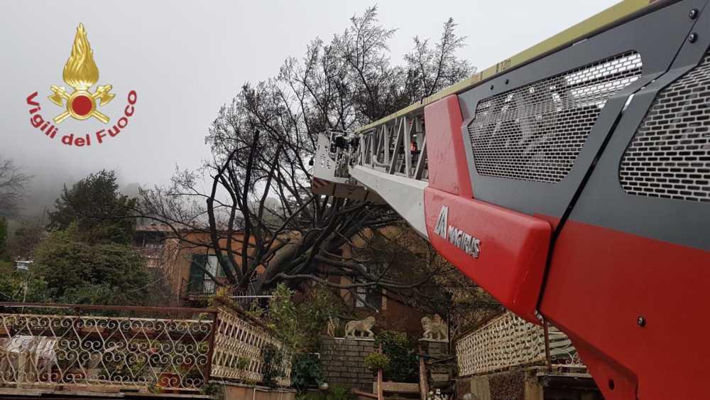 Albero si abbatte su una casa ad Allumiere: intervengono i pompieri