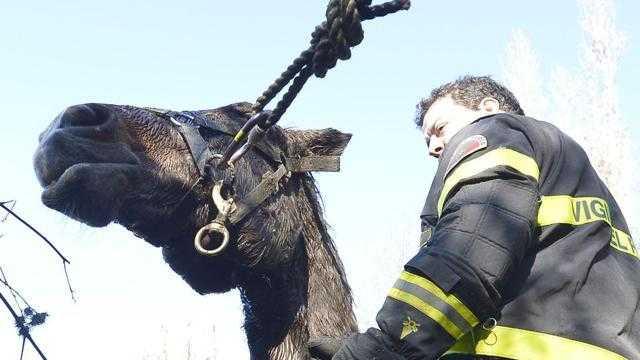 Cavallo cade in piscina ad Allumiere, i pompieri lo salvano