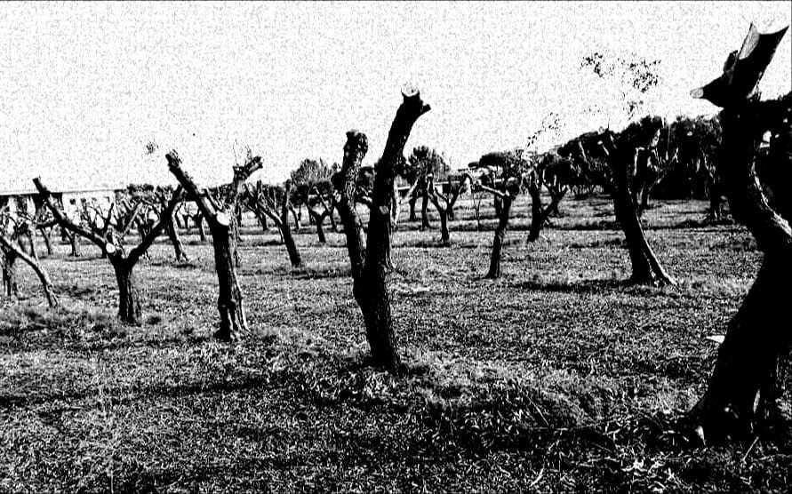 """Pd Ladispoli a Grando: """"Mente sul lotto degli ulivi, non c'era bisogno di cubature"""""""